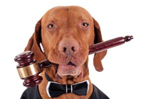 law dog
